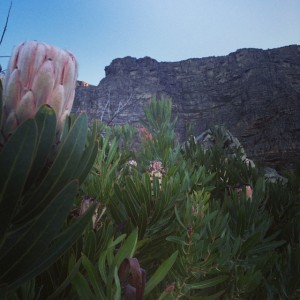 Flowers to Table Mountain by Kelsey