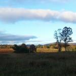 Big Meadow